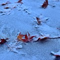 Photos: 冬にも負けず…