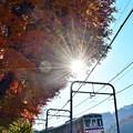 写真: 初冬の陽射し