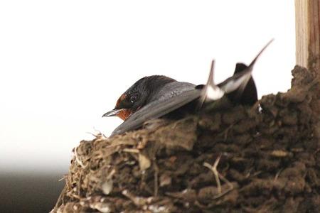 奥さま巣の中