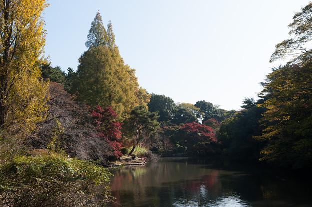 【新宿御苑(モミジ山)】1