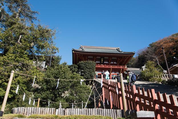 【鶴ヶ岡八幡宮(大銀杏跡)】1