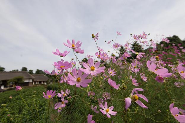 昭和記念公園【こもれびの里の様子】4