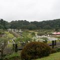 秋の生田緑地ばら苑