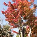 昭和記念公園【日本庭園の紅葉】1-3
