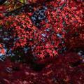 Photos: 昭和記念公園【日本庭園の紅葉】3-2