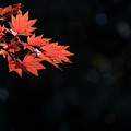 Photos: 昭和記念公園【日本庭園の紅葉】3-5