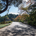 新宿御苑【千駄ヶ谷門からツツジ山へ向かう】