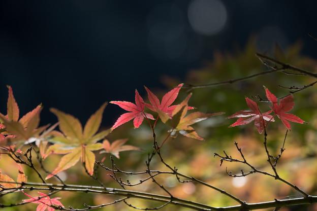 【小石川後楽園の紅葉】7