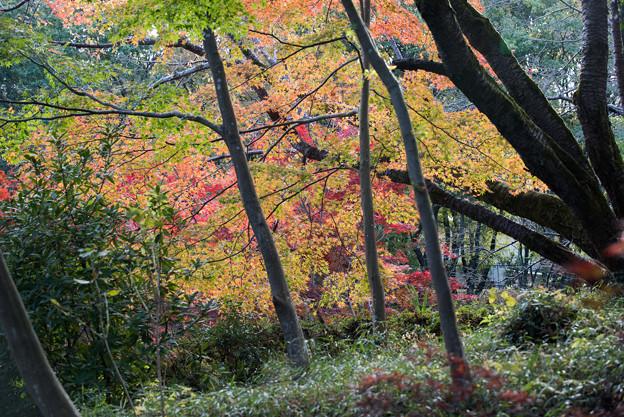 薬師池公園【菖蒲田あたりの景色】5