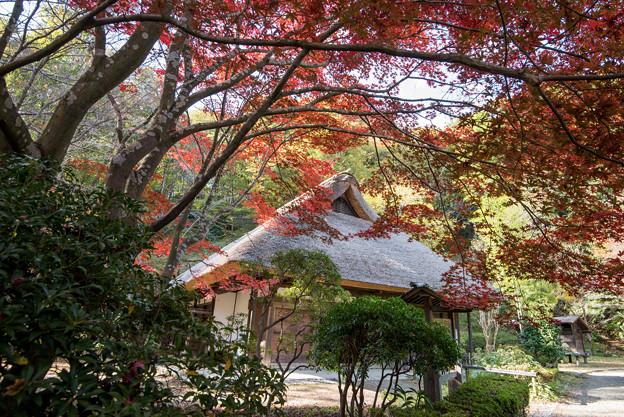 薬師池公園【旧荻野家の景色】4