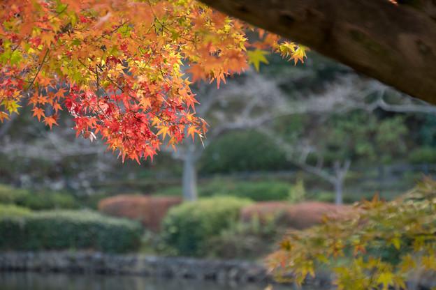 薬師池公園【旧荻野家の景色】5