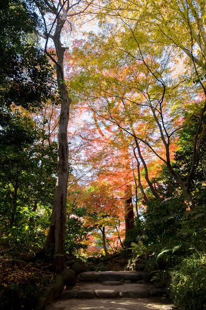 小石川後楽園【小盧山付近の紅葉】1