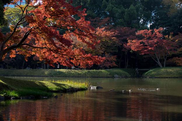 小石川後楽園【蓬莱島付近の紅葉】2
