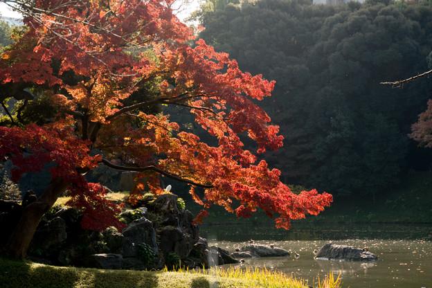 小石川後楽園【蓬莱島付近の紅葉】3