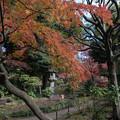 旧古河庭園【日本風の庭園】2