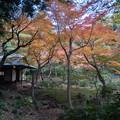 旧古河庭園【日本風の庭園】3