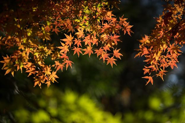 【九品仏浄真寺の紅葉】2-1
