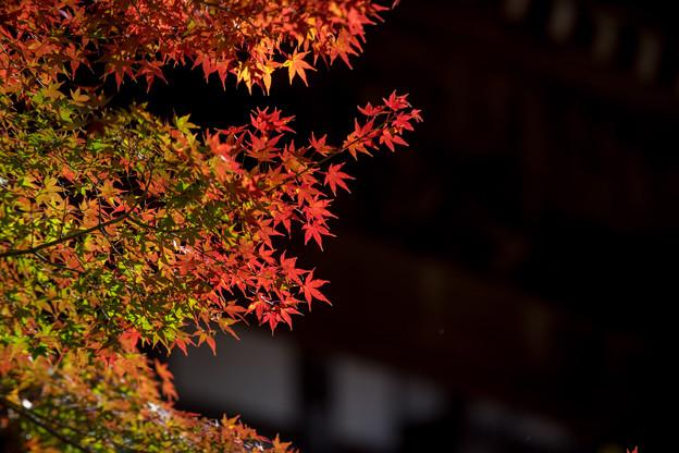 【九品仏浄真寺の紅葉】5-1