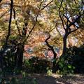新宿御苑【下の池付近の紅葉】1