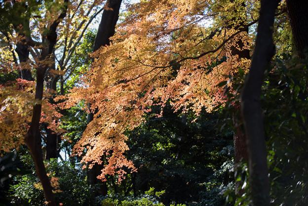 新宿御苑【下の池付近の紅葉】6