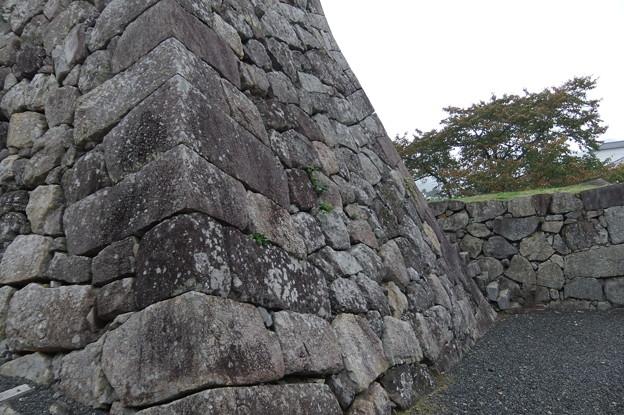 篠山城址跡 石垣