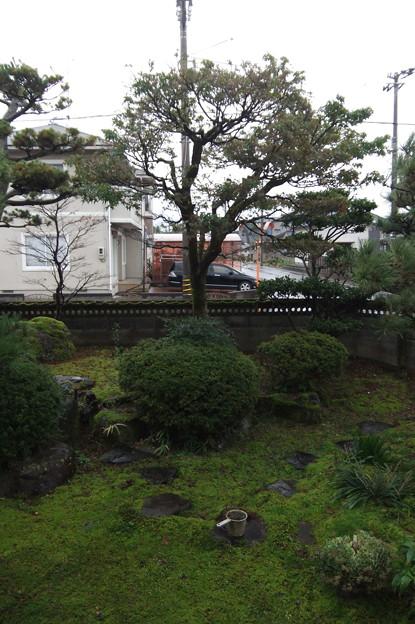 11月18日 朝の庭