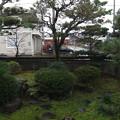 写真: 11月18日 朝の庭