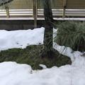 写真: 積雪は10センチ位に