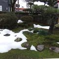 写真: 1月22日朝の庭