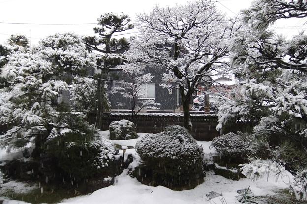 1月22日 墨絵の庭