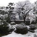 写真: 1月22日 墨絵の庭