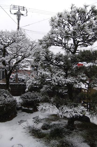 写真: 1月22日 墨絵の庭2