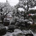 1月22日 墨絵の庭2