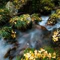 落葉彩る小川
