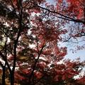 写真: IMG_7725宝筐院・いろは紅葉