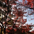 Photos: IMG_7725宝筐院・いろは紅葉