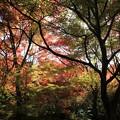 写真: IMG_7731宝筐院・いろは紅葉