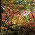 写真: IMG_7732宝筐院・いろは紅葉