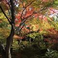 写真: IMG_7733宝筐院・いろは紅葉