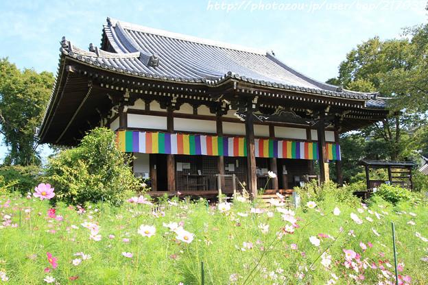 IMG_6692般若寺・本堂と秋桜
