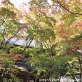 IMG_7217永源寺・山門といろは紅葉