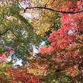 写真: IMG_7249永源寺・いろは紅葉
