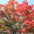 写真: IMG_7260永源寺・いろは紅葉