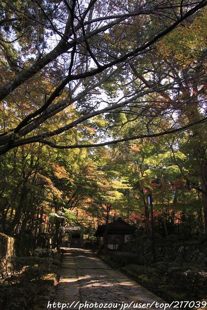 IMG_7477金剛輪寺(松尾寺)