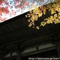 IMG_7523西明寺・いろは紅葉と二天門(重要文化財)