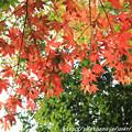 写真: IMG_7549西明寺・いろは紅葉
