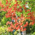 写真: IMG_7550西明寺・いろは紅葉