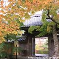 写真: IMG_7566西明寺・いろは紅葉と門