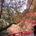 写真: IMG_7607高雄