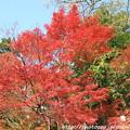 写真: IMG_7608西明寺・いろは紅葉
